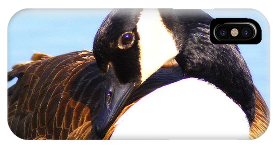 Canada Goose IPhone X / XS Case featuring the photograph 0932 - Canada Goose by Travis Truelove