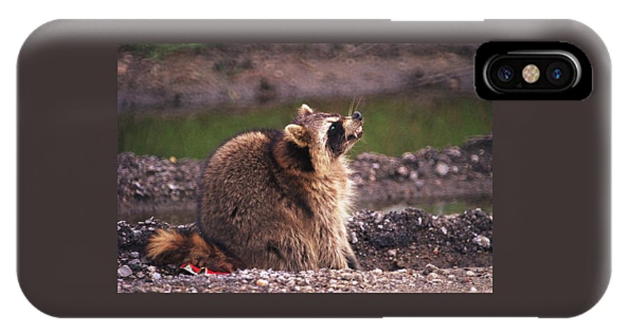Raccoon IPhone Case featuring the photograph 070406-67 by Mike Davis