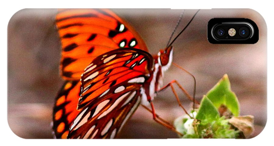Butterfly IPhone X / XS Case featuring the photograph 4534 - Butterfly by Travis Truelove