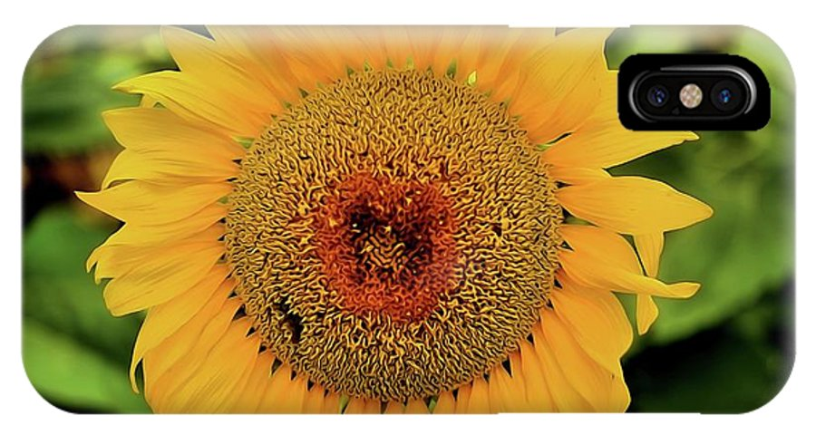 Floral Photography IPhone X Case featuring the photograph A Texas Flower by Diana Mary Sharpton