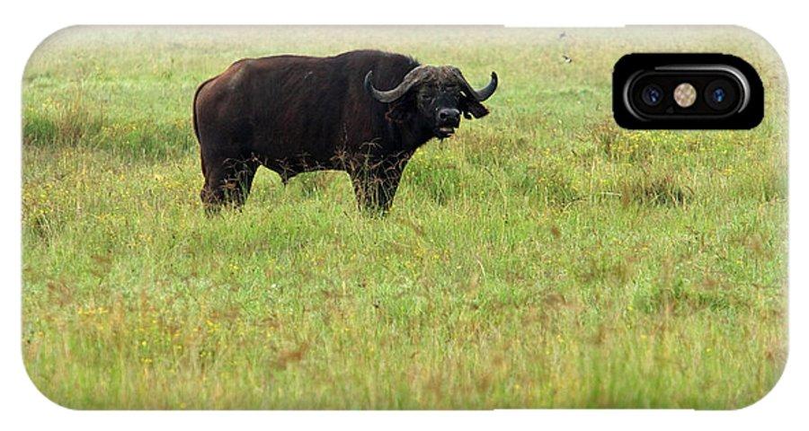 Water Buffalo IPhone X Case featuring the photograph African Buffalo by Aidan Moran