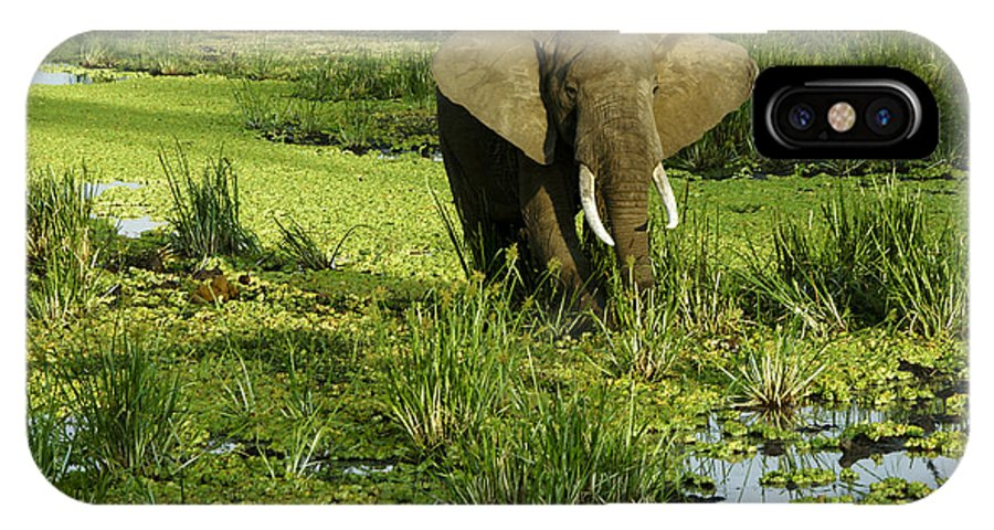 Africa IPhone X Case featuring the photograph African Elephant In Swamp by Michele Burgess