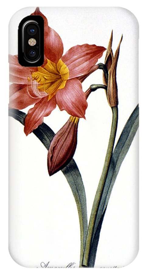 1833 IPhone X Case featuring the photograph Amaryllis by Granger