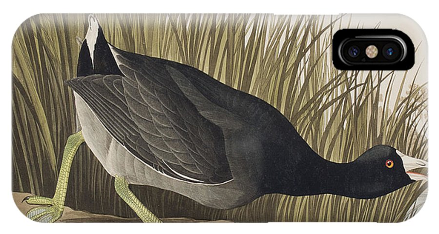 Coot IPhone X Case featuring the painting American Coot by John James Audubon