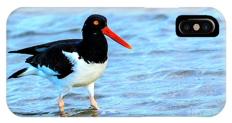 American Oystercatcher IPhone X Case featuring the photograph American Oystercatcher by Ben Graham