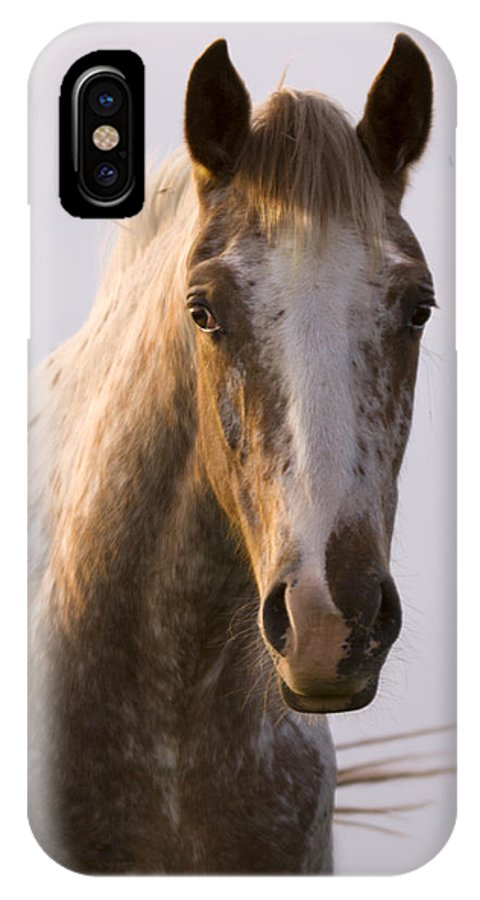 Horse IPhone X Case featuring the photograph Appaloosa Horse by Angel Ciesniarska