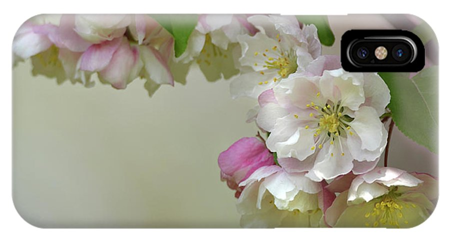 Flower IPhone X Case featuring the photograph Apple Blossoms by Ann Bridges