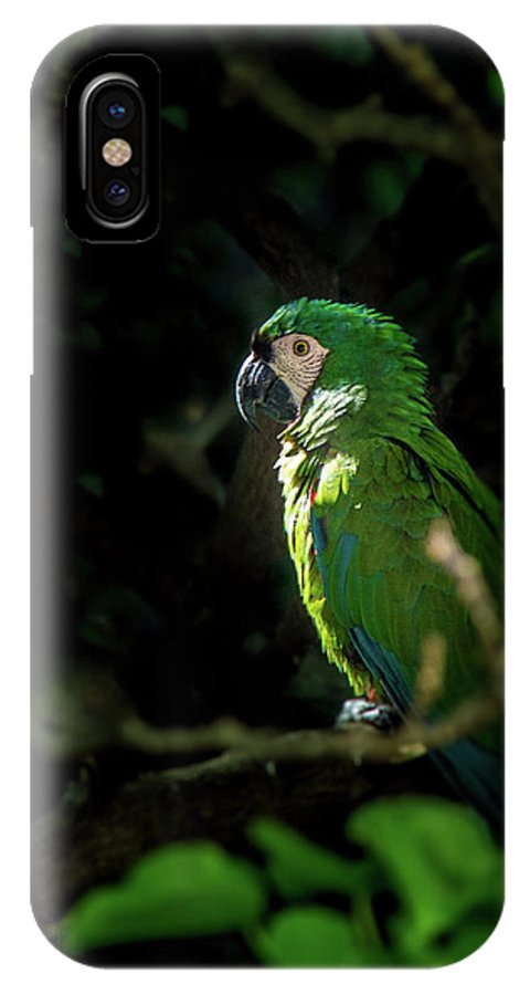Fauna IPhone X Case featuring the photograph Ara Sp. by Juan Carlos Lopez