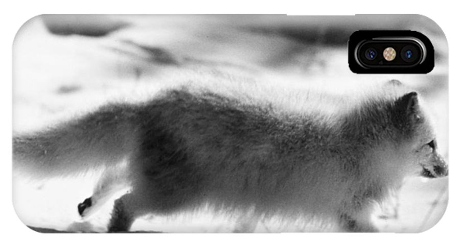 20th Century IPhone X Case featuring the photograph Arctic Fox by Granger