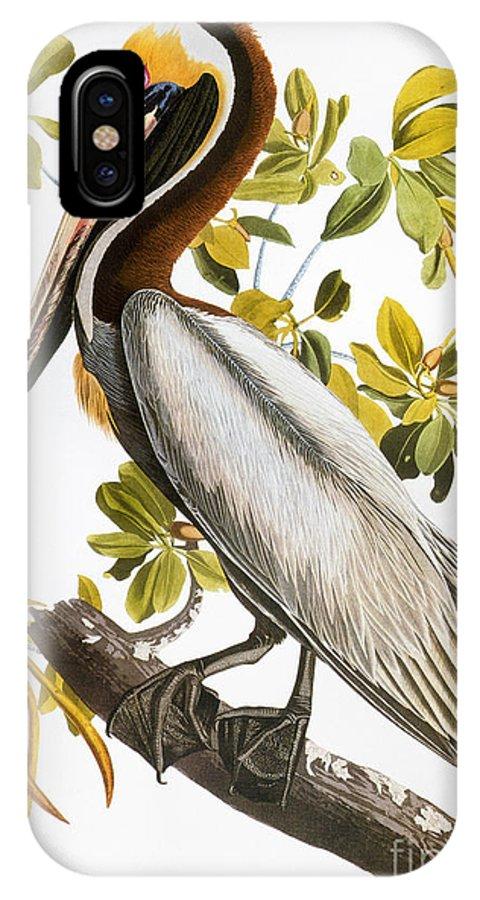 1838 IPhone X Case featuring the photograph Audubon: Pelican by Granger