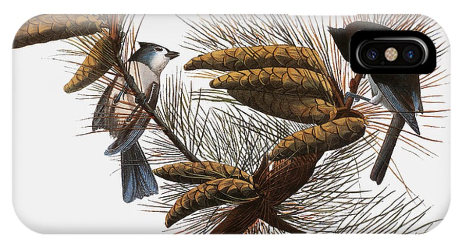 1838 IPhone X Case featuring the photograph Audubon: Titmouse by Granger