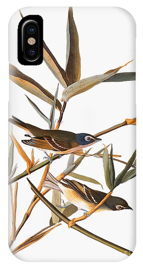 1838 IPhone X Case featuring the photograph Audubon: Vireo by Granger
