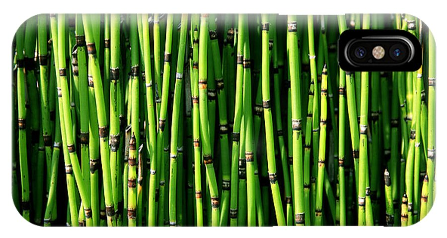 Bamboo IPhone X Case featuring the photograph Bamboo by Timothy Johnson