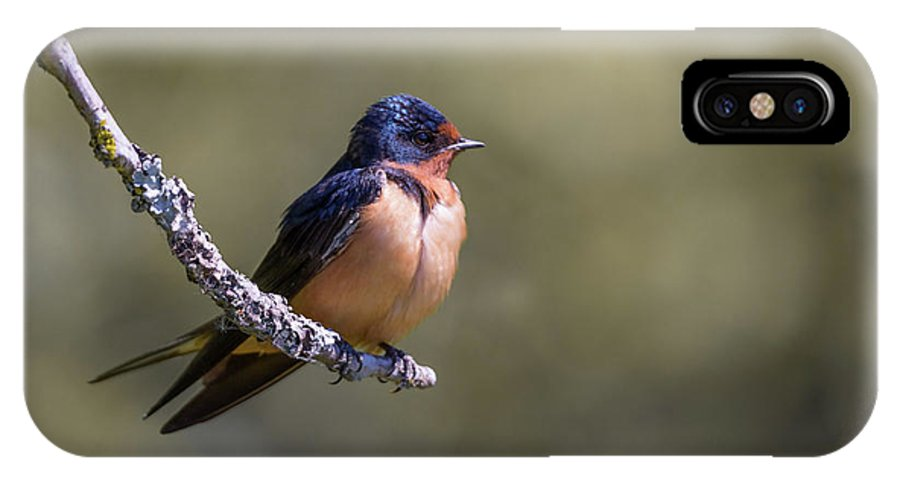 Swallow IPhone X / XS Case featuring the photograph Barn Swallow by Kathy King