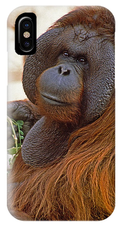 Orangutan IPhone X Case featuring the photograph Big Daddy by Michele Burgess