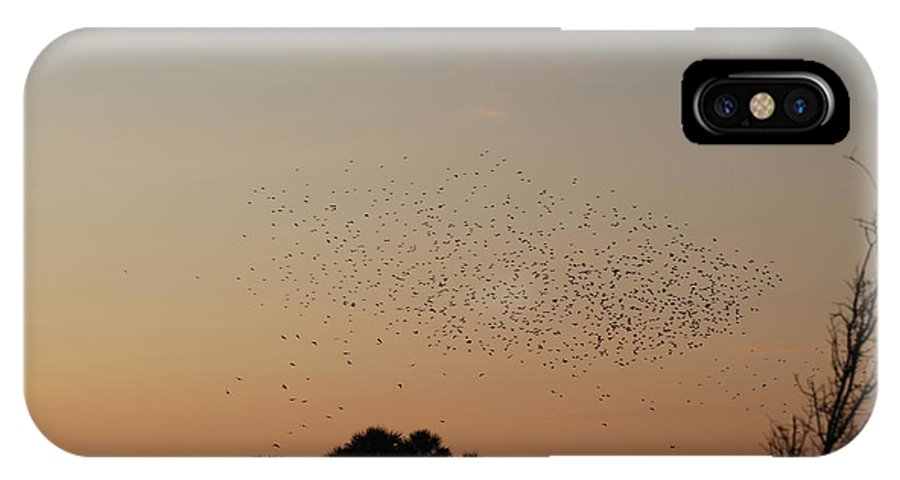 Nature IPhone X Case featuring the photograph Birds In The Sun by Rob Hans