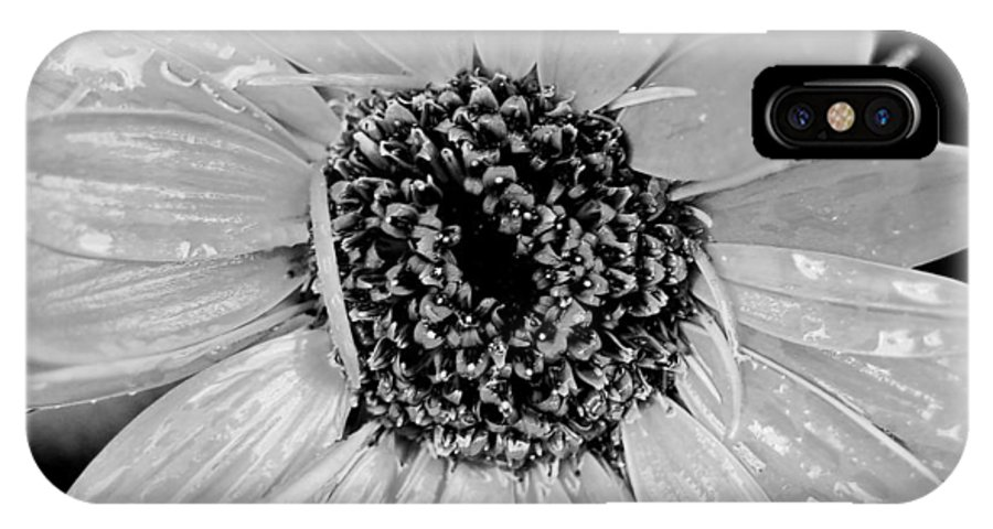 Gerber Daisy IPhone Case featuring the photograph Black And White Gerbera Daisy by Amy Fose