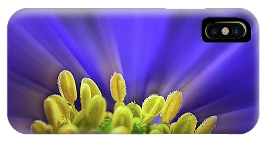 Beautiful IPhone X Case featuring the photograph blue Shades - An Anemone Blanda by John Edwards