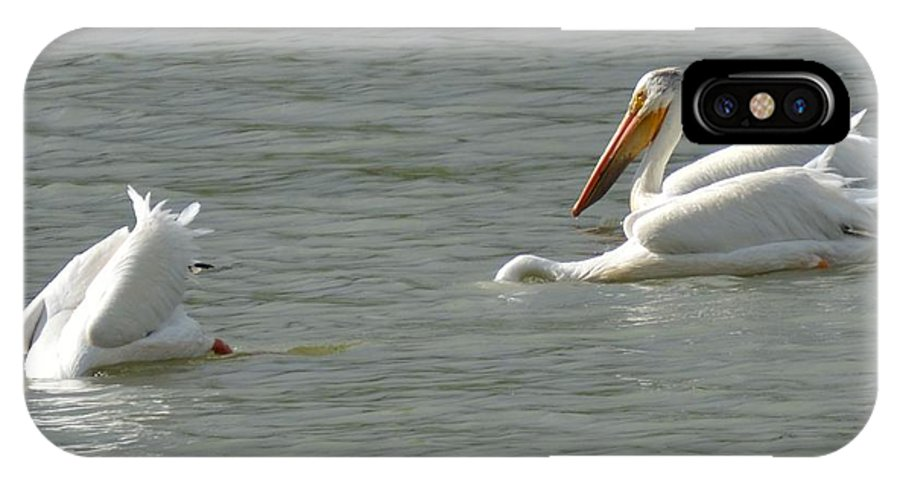 Pelicans IPhone X Case featuring the photograph Bottoms Up by Wendy Fox