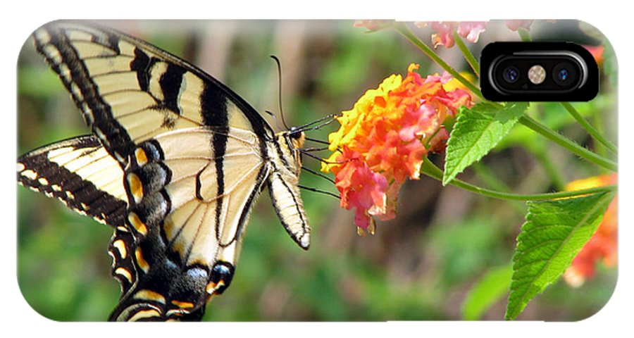 Butterfly IPhone Case featuring the photograph Butterfly by Amanda Barcon
