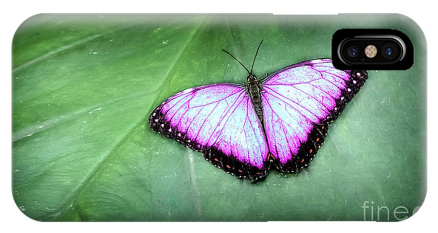 Feeding IPhone X Case featuring the photograph Butterfly by Shaun Wilkinson