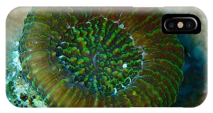 Macro Of Cactus Ring Coral IPhone X / XS Case featuring the photograph Cactus Ring Coral by Nina Banks