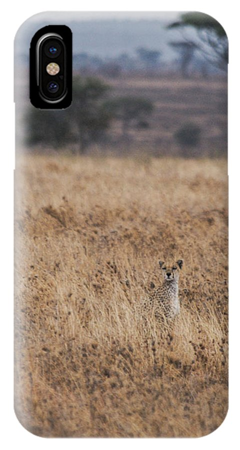 Cheetah IPhone X Case featuring the photograph Cheetah In The Tall Grass by Marc Levine
