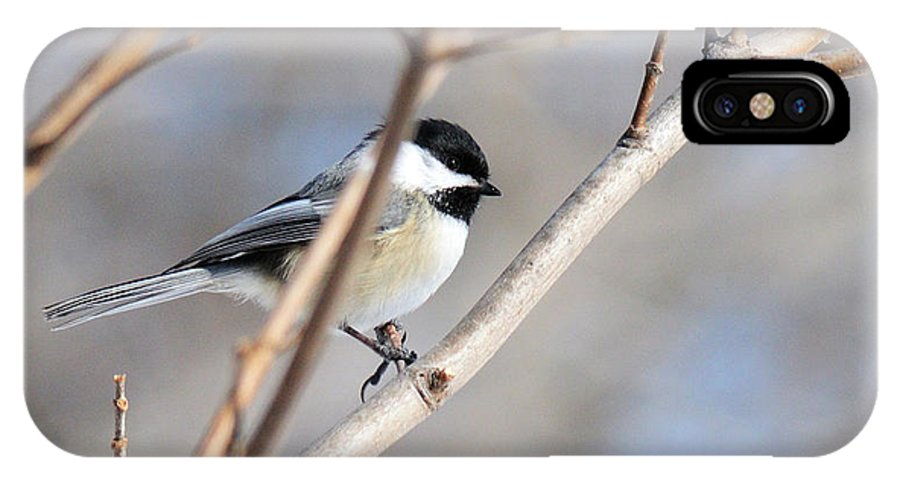 Bird IPhone X Case featuring the photograph Chickadee by David Arment