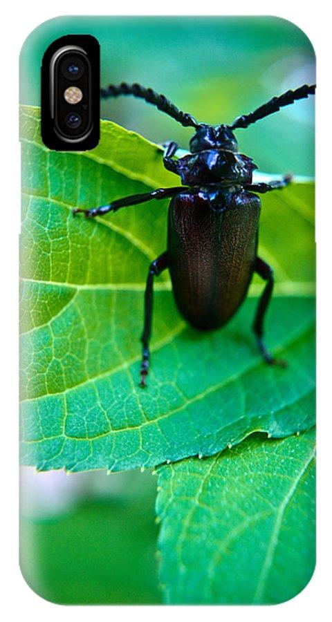 Climbing IPhone X Case featuring the photograph Climbing Beetle by Douglas Barnett