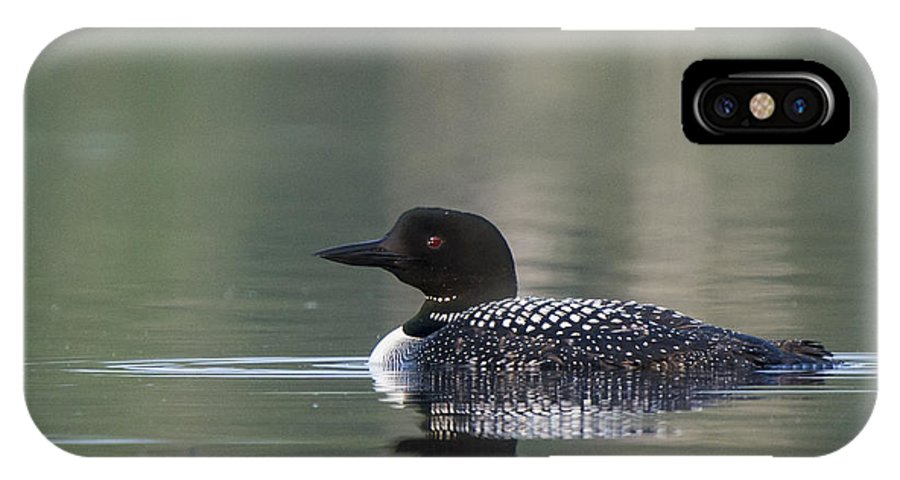 Common Loon IPhone X Case featuring the photograph Common Loon by Julie DeRoche
