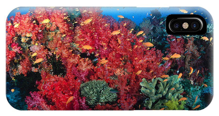 Alcyonarian IPhone X Case featuring the photograph Coral Reef Scene by Dave Fleetham - Printscapes