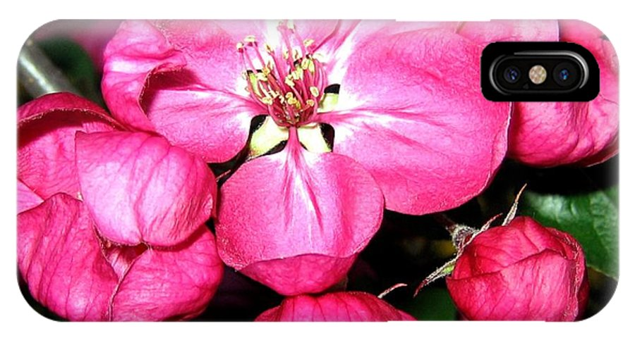 Blossoms IPhone X Case featuring the photograph Crab Apple Blossoms by Will Borden