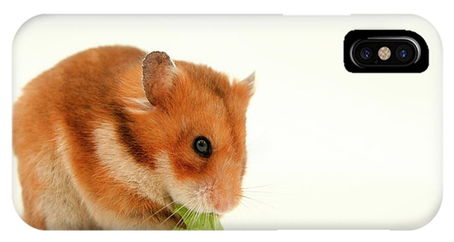 Hamster IPhone X Case featuring the photograph Curious Hamster by Yedidya yos mizrachi