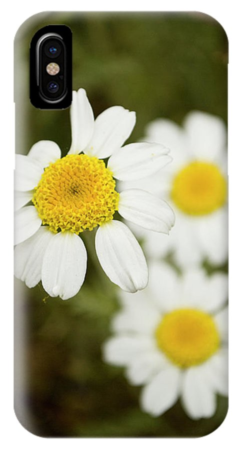 Photography IPhone X / XS Case featuring the photograph Daisies #1 by Ignacio Leal Orozco
