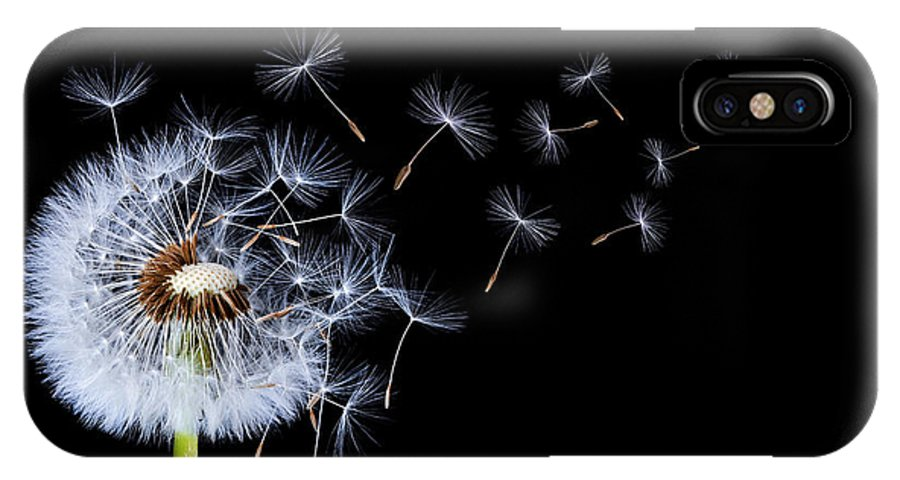 Dandelion On Black Background Iphone X Case For Sale By Bess Hamiti