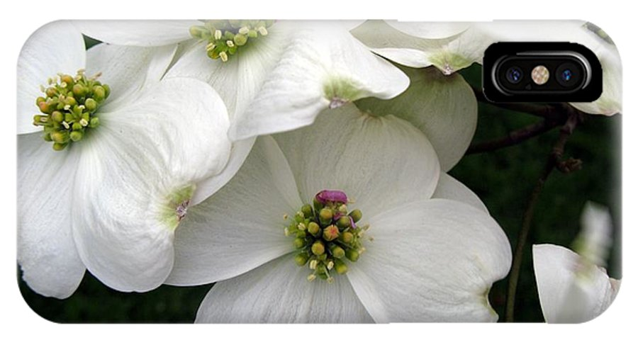 Dogwood IPhone X Case featuring the photograph Dogwood Branch by Carol Sweetwood