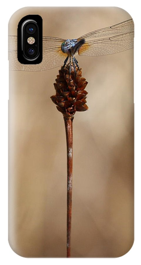 Dragonfly IPhone X Case featuring the photograph Dragonfly On Reed by Carol Groenen