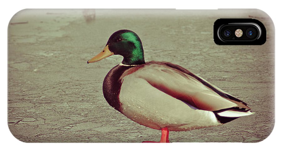 Ice IPhone X Case featuring the photograph Duck by Brenton Woodruff