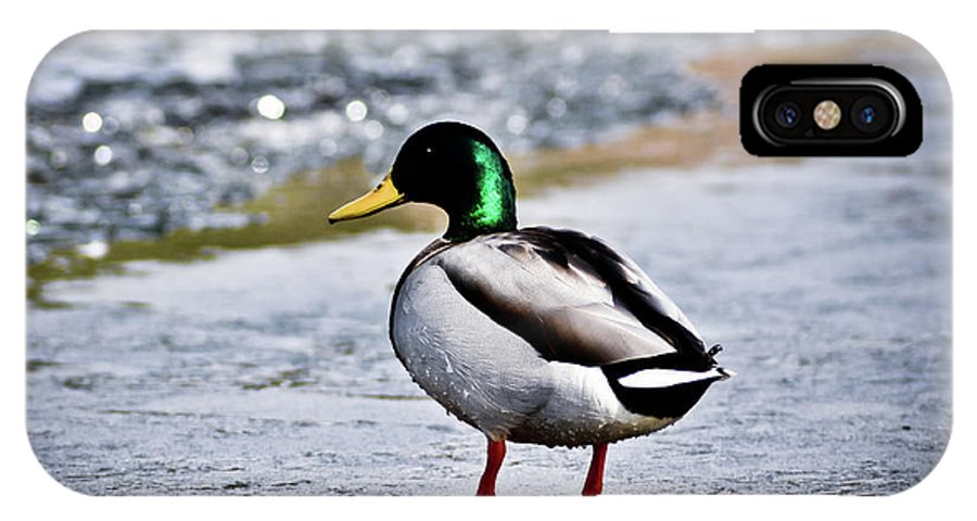 Duck IPhone X Case featuring the photograph Duck On Ice by Brenton Woodruff