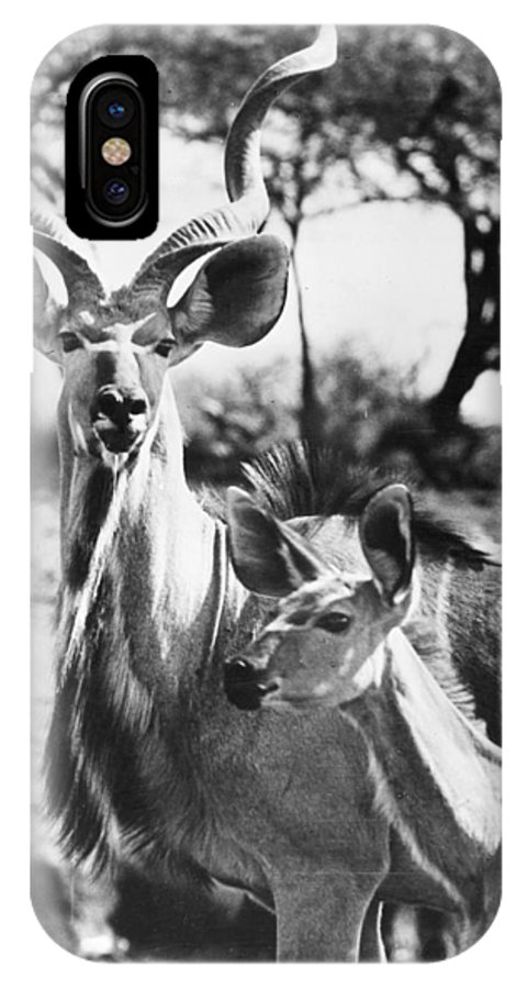 20th Century IPhone X Case featuring the photograph East Africa: Kudu by Granger
