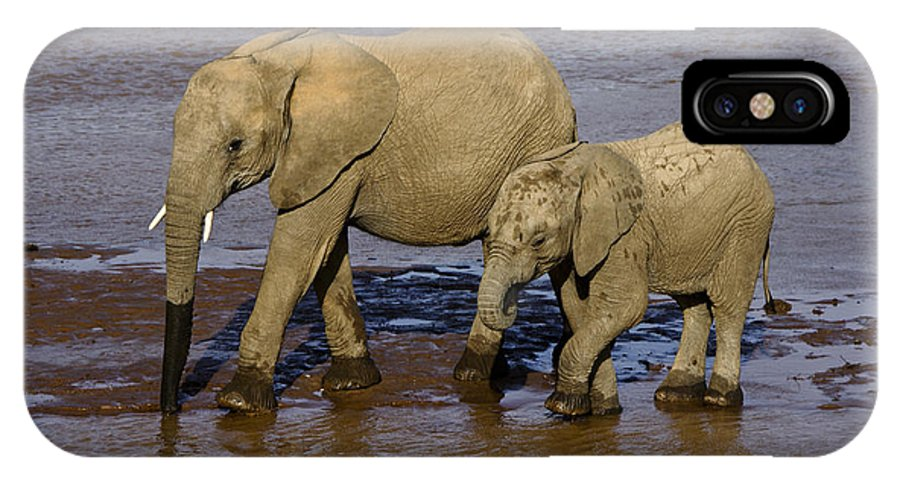 Africa IPhone X Case featuring the photograph Elephant Crossing by Michele Burgess