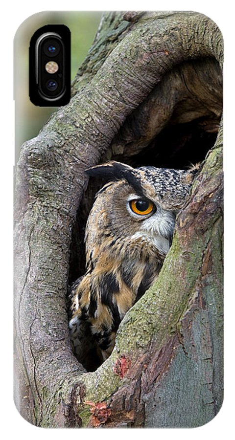 Fn IPhone X Case featuring the photograph Eurasian Eagle-owl Bubo Bubo Looking by Rob Reijnen