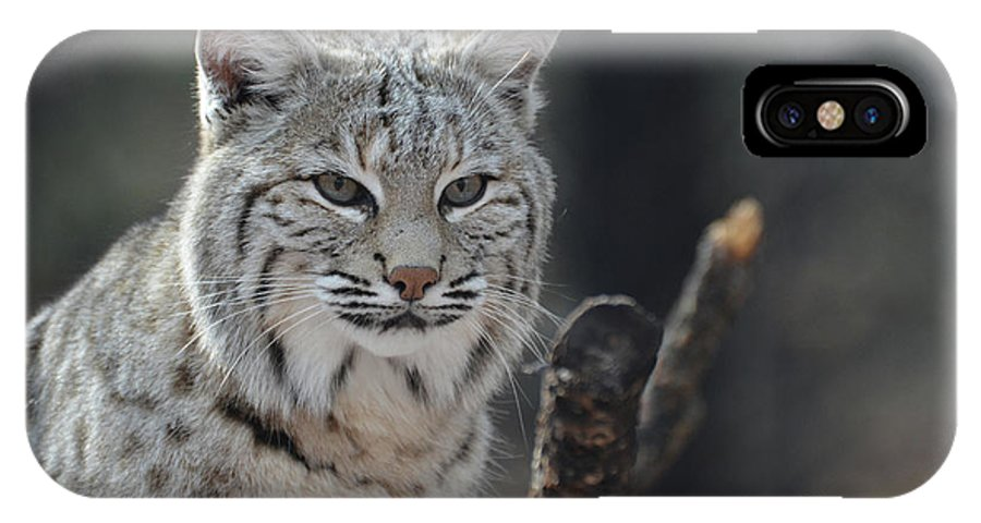 Bobcat IPhone X Case featuring the photograph Face Of A Canadian Lynx by DejaVu Designs