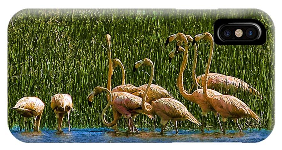Flamingos IPhone X Case featuring the photograph Flamingo Family by Galeria Trompiz