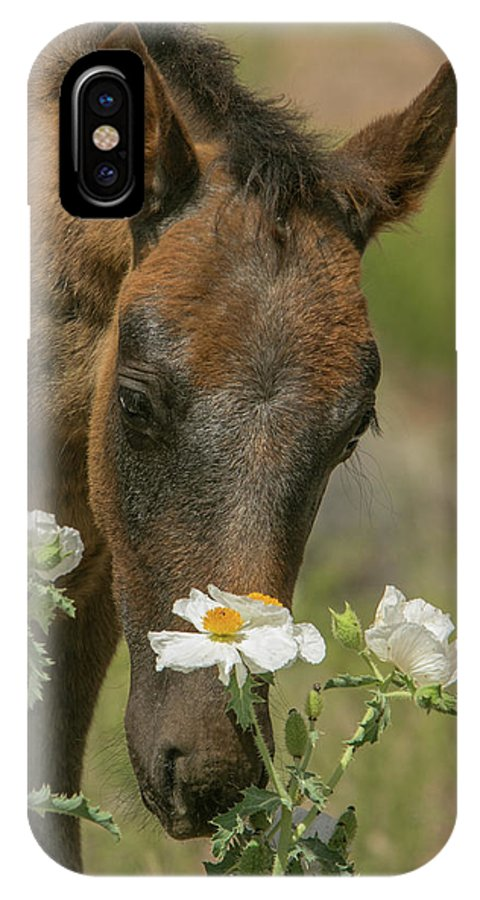Horse IPhone X Case featuring the photograph Flower Child by Kent Keller