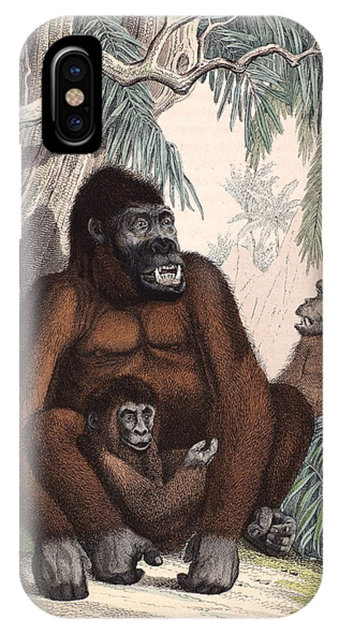 1853 IPhone X Case featuring the photograph Gorillas by Granger