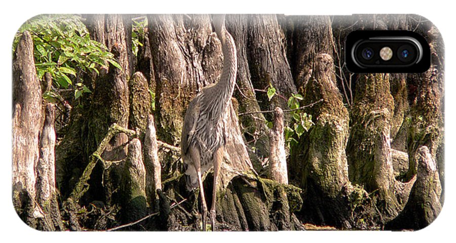 Great Blue Heron IPhone X Case featuring the photograph Heron And Cypress Knees by Steven Sparks