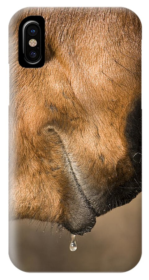 Horse IPhone X Case featuring the photograph Horse Portrait by Ian Middleton