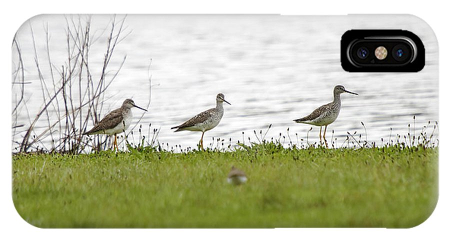 Sandpipers IPhone X Case featuring the photograph In A Row by Donald Crosby