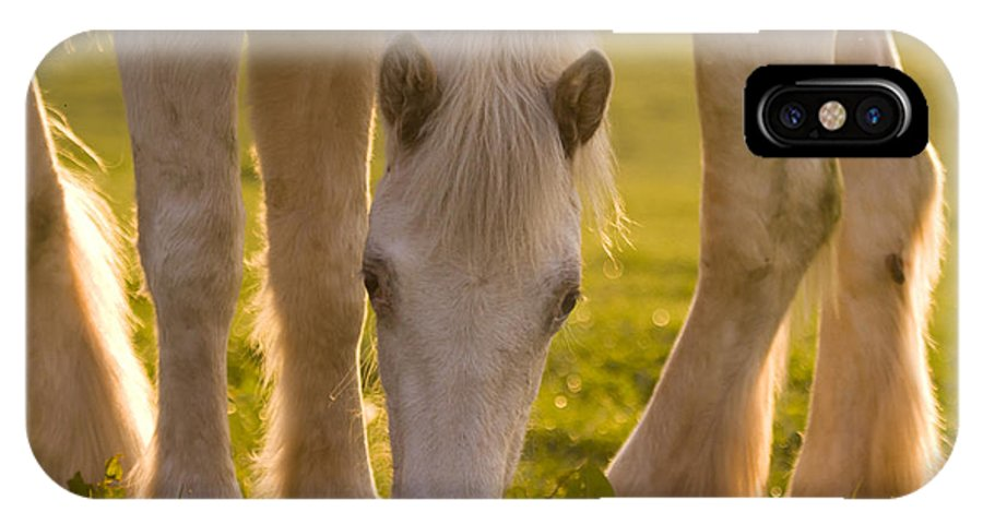 Horse IPhone X Case featuring the photograph In The Golden Light by Angel Ciesniarska